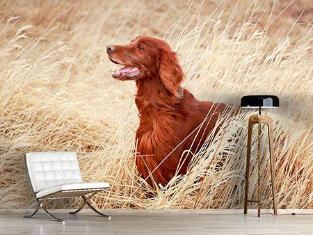 Wandbespannung Irish Red Setter